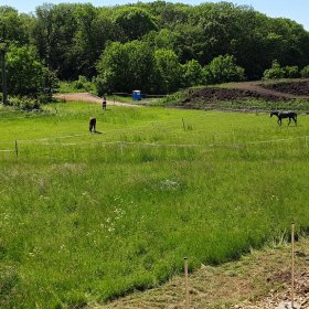 a ihned vedle je oáza klidu - les a koně